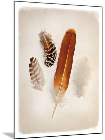 Feather Group I-Debra Van Swearingen-Mounted Art Print