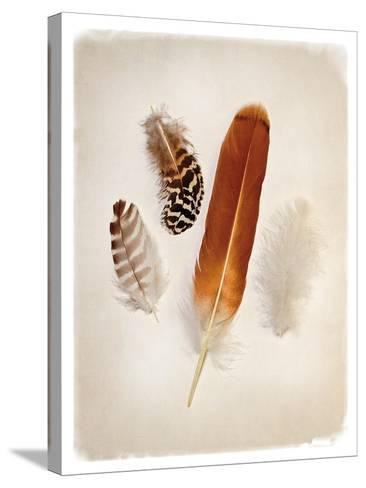 Feather Group I-Debra Van Swearingen-Stretched Canvas Print