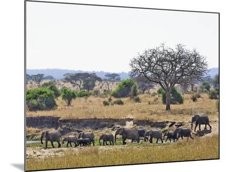 African Bush Elephants (Loxodonta Africana), Tarangire National Park, Tanzania, Africa-Adam Jones-Mounted Photographic Print