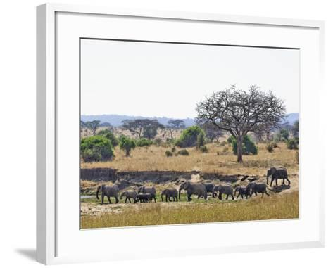 African Bush Elephants (Loxodonta Africana), Tarangire National Park, Tanzania, Africa-Adam Jones-Framed Art Print