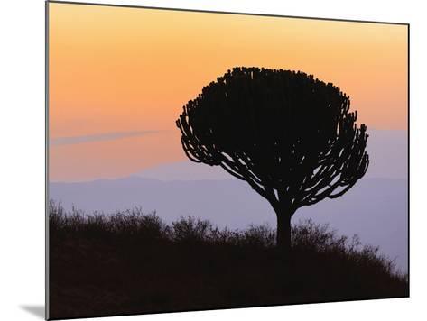 Candelabra Tree (Euphorbia Ingens) Silhouetted at Sunrise, Ngorongoro Crater, Tanzania, Africa-Adam Jones-Mounted Photographic Print