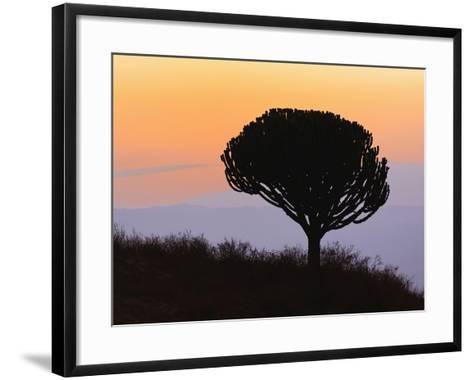 Candelabra Tree (Euphorbia Ingens) Silhouetted at Sunrise, Ngorongoro Crater, Tanzania, Africa-Adam Jones-Framed Art Print