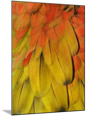 Feather Pattern on Macaw-Adam Jones-Mounted Photographic Print