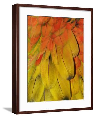 Feather Pattern on Macaw-Adam Jones-Framed Art Print
