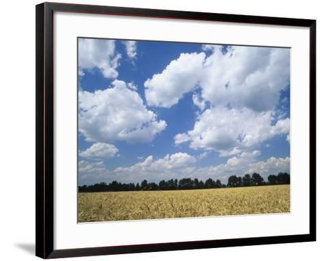 Wheat Field and Fair Weather Cumulus Clouds, Louisville, Kentucky-Adam Jones-Framed Art Print