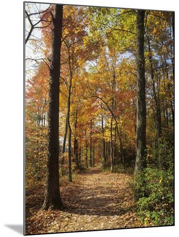 Pathway Through an Autumn Deciduous Forest, Red River Gorge Geological Area-Adam Jones-Mounted Photographic Print