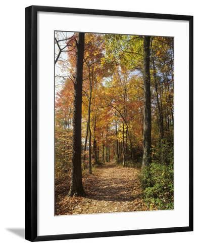 Pathway Through an Autumn Deciduous Forest, Red River Gorge Geological Area-Adam Jones-Framed Art Print
