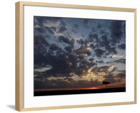 Umbrella Thorn Acacia (Acacia Tortilis) and Hot Air Balloons Silhouetted at Sunrise on the Savanna-Adam Jones-Framed Art Print