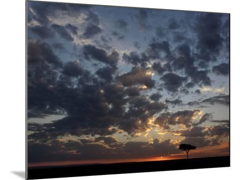Umbrella Thorn Acacia (Acacia Tortilis) and Hot Air Balloons Silhouetted at Sunrise on the Savanna-Adam Jones-Mounted Photographic Print