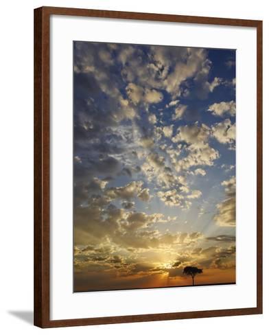 Umbrella Thorn Acacia (Acacia Tortilis) Silhouetted at Sunrise, Masai Mara Game Reserve, Kenya-Adam Jones-Framed Art Print