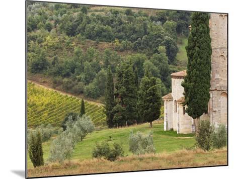 Vineyard and St. Antimo Abbey, Near Montalcino, Italy, Tuscany-Adam Jones-Mounted Photographic Print