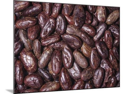 Raw, Whole Cacao Beans, the Source of Chocolate (Theobroma Cacao)Native to Tropical South America-Ken Lucas-Mounted Photographic Print