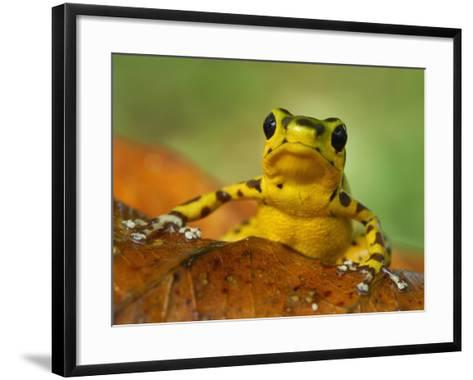 Strawberry Poison Dart Frog (Dendrobates Pumilio), Bastimentos National Park, Bocas Del Toro-Thomas Marent-Framed Art Print
