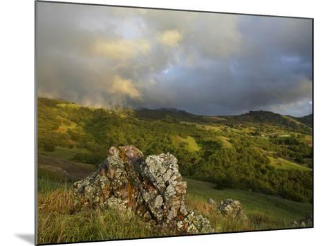 Mist on the Slope of Mt. Diablo After A Late Winter Storm, Central California, USA-Patrick Smith-Mounted Photographic Print