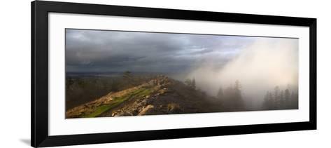 Simultaneous Sunlight and Fog on Spencer Butte in the Coast Ranges-Marli Miller-Framed Art Print
