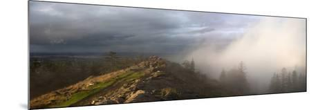 Simultaneous Sunlight and Fog on Spencer Butte in the Coast Ranges-Marli Miller-Mounted Photographic Print
