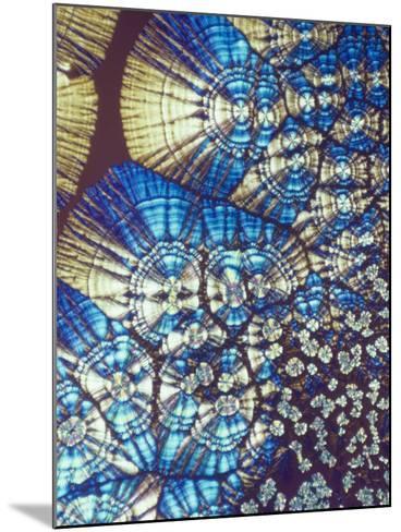 Vitamin C (Ascorbic Acid) Crystals, Polarized LM-George Musil-Mounted Photographic Print