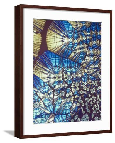 Vitamin C (Ascorbic Acid) Crystals, Polarized LM-George Musil-Framed Art Print