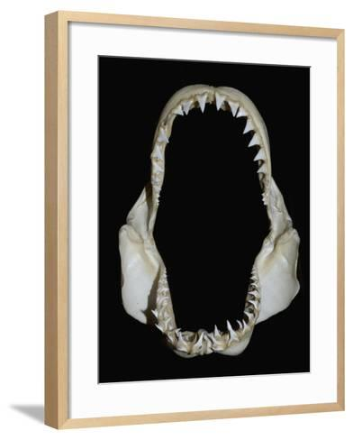Jaws of a Great White Shark (Carcharodon Carcharias)-Andy Murch-Framed Art Print