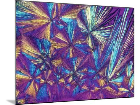 Polarized View of Naprosyn, a Drug Used for Treating Pain and Inflammation, LM X50-Arthur Siegelman-Mounted Photographic Print