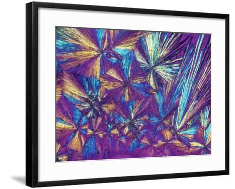Polarized View of Naprosyn, a Drug Used for Treating Pain and Inflammation, LM X50-Arthur Siegelman-Framed Art Print