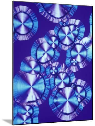 Vitamin C (Ascorbic Acid) Crystals, Polarized LM-Arthur Siegelman-Mounted Photographic Print