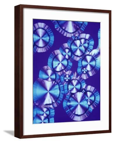 Vitamin C (Ascorbic Acid) Crystals, Polarized LM-Arthur Siegelman-Framed Art Print