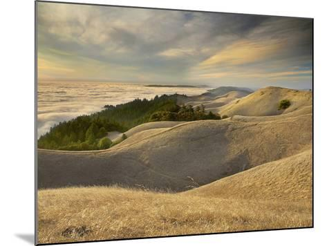 Fog over San Francisco Bay Seen from the Top of Mt. Tamalpais, California, USA-Patrick Smith-Mounted Photographic Print