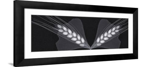 X-Ray of Ginkgo Leaves and Wheat-George Taylor-Framed Art Print