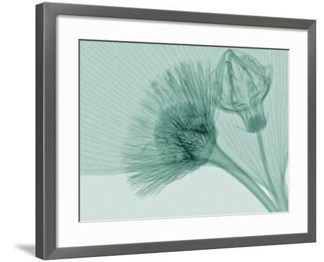 X-Ray of Ginkgo Leaf and Chives Flowers-George Taylor-Framed Art Print