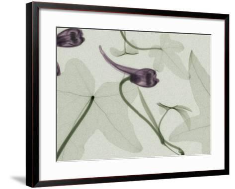 X-Ray Ivy Leaves and Flowers-George Taylor-Framed Art Print