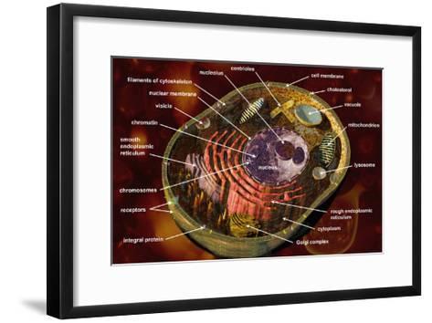 Biomedical Illustration of a Generalized Animal Cell Section Showing its Major Organelles Labeled-Carol & Mike Werner-Framed Art Print