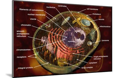 Biomedical Illustration of a Generalized Animal Cell Section Showing its Major Organelles Labeled-Carol & Mike Werner-Mounted Photographic Print