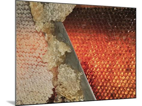 Small Honey Producers Still Use the Uncapping Knife to Prepare the Bee Hive Frames-Eric Tourneret-Mounted Photographic Print