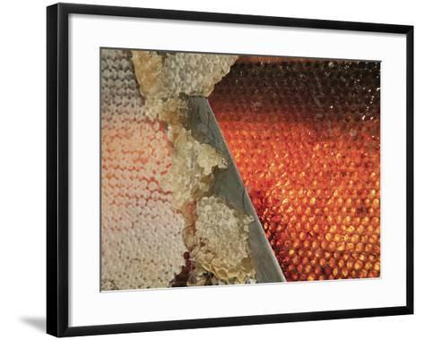 Small Honey Producers Still Use the Uncapping Knife to Prepare the Bee Hive Frames-Eric Tourneret-Framed Art Print