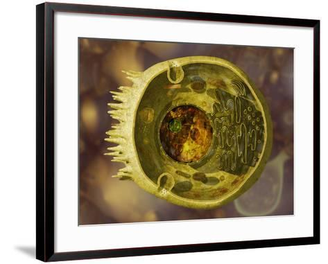 Biomedical Illustration of a Cross-Section of a Human Eukaryotic Cell and its Organelles-Carol & Mike Werner-Framed Art Print