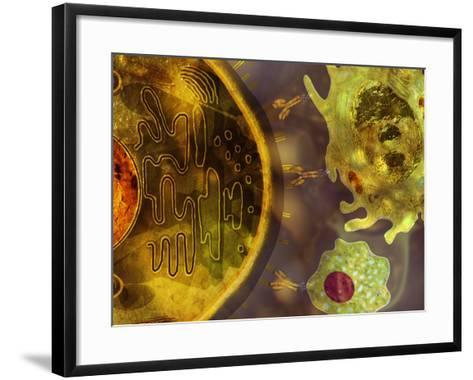 Illustration of Monoclonal Antibodies That are Made by Identical Immune Cells-Carol & Mike Werner-Framed Art Print