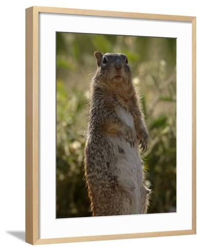 Black-Tailed Prairie Dog (Cynomys Ludovicianus), Arizona, USA-Dave Watts-Framed Art Print