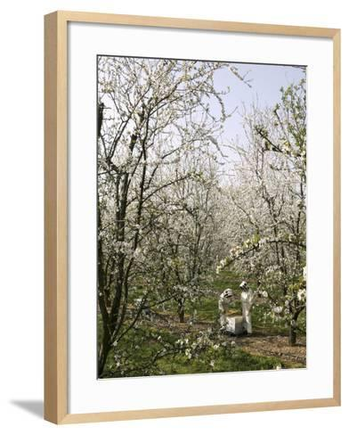Beekeepers Placing Honey Bee Hives Among Almond Trees in an Orchard-Eric Tourneret-Framed Art Print