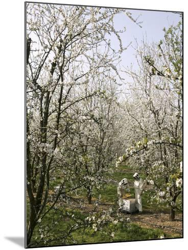 Beekeepers Placing Honey Bee Hives Among Almond Trees in an Orchard-Eric Tourneret-Mounted Photographic Print