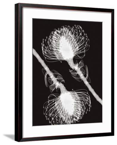 X-Ray of Pincushion Protea Flowers-George Taylor-Framed Art Print