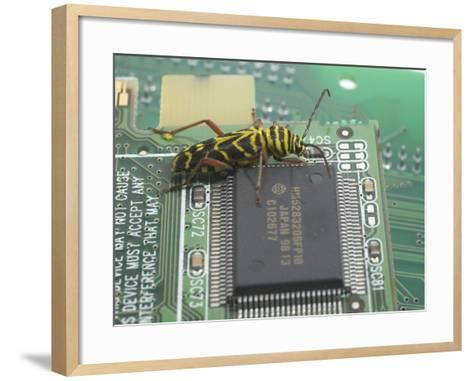 Locust Borer, Megacyllene Robiniae, on a Printed Circuit Board Next to an Integrated Circuit-B. Mete Uz-Framed Art Print