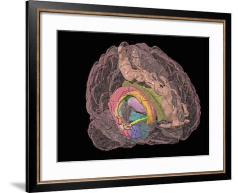 Human Brain Showing the Limbic System-Arthur Toga-Framed Art Print