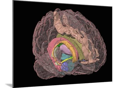 Human Brain Showing the Limbic System-Arthur Toga-Mounted Photographic Print
