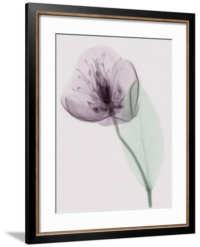 X-Ray of a Leaf and Flower-George Taylor-Framed Art Print