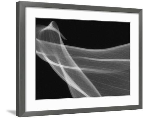 X-Ray of Calla Lily Flower Petals-George Taylor-Framed Art Print