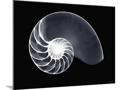 X-Ray of a Chambered Nautilus Shell-George Taylor-Mounted Photographic Print