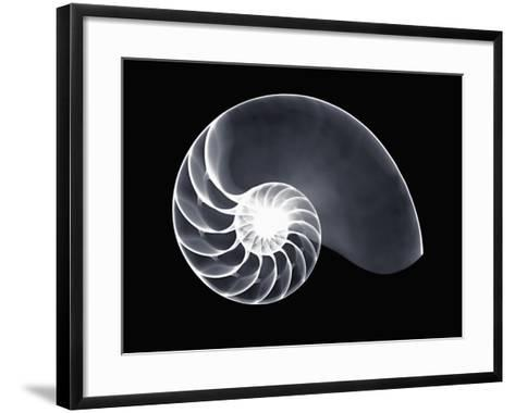 X-Ray of a Chambered Nautilus Shell-George Taylor-Framed Art Print
