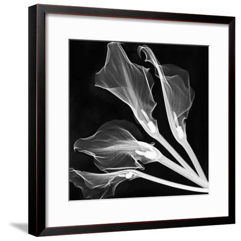 X-Ray of Lily Flowers-George Taylor-Framed Art Print