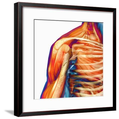 Human Male Shoulder Ball and Socket Joint, Showing Bones and Muscles-Carol & Mike Werner-Framed Art Print